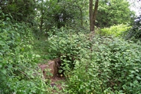 Coleshill station remains